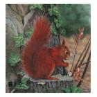 JVD mókus lőlap